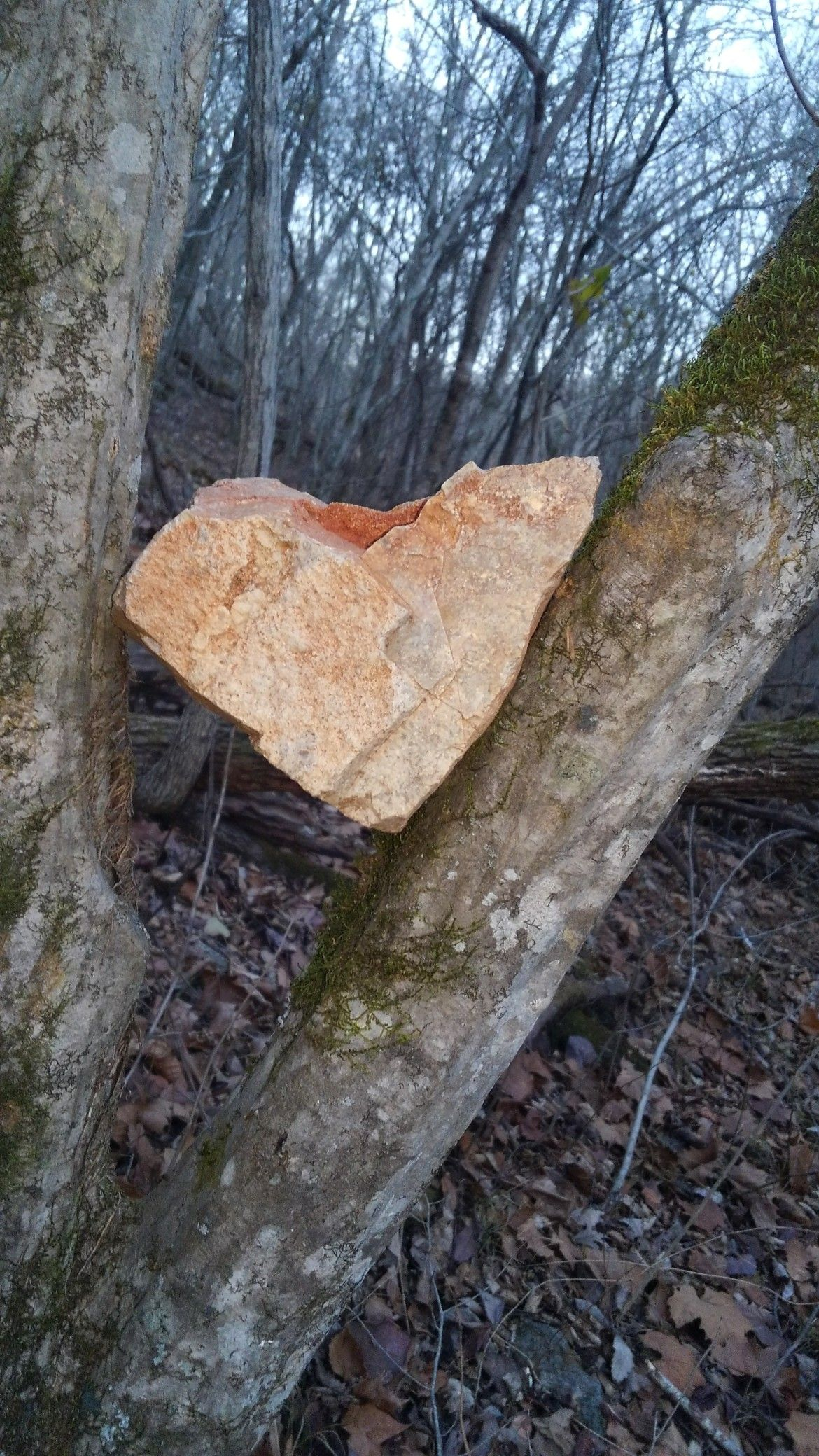 We found this rock in a tree near Cave Springs which is