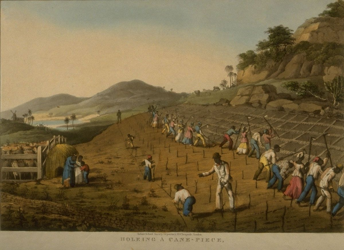 plantation system in the caribbean Race and the origins of plantation towards a black majority with a brutally demanding staple crop and a plantation system that resembled caribbean sugar.
