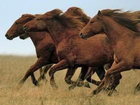 *Full gallop