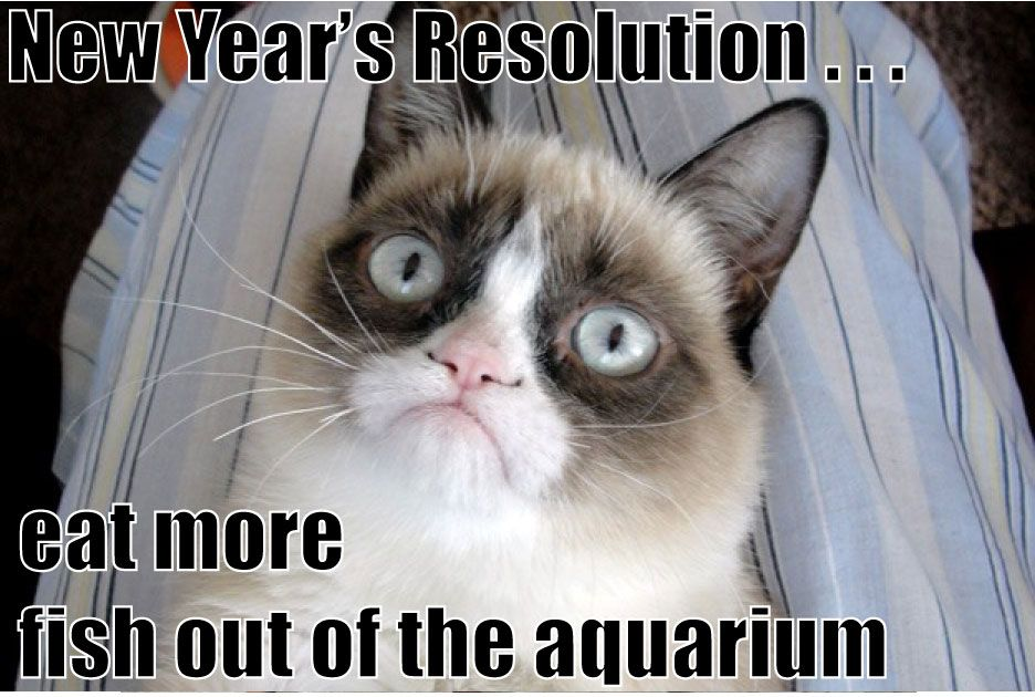 Grumpy Cat's New Years Resolution For more New Years cats