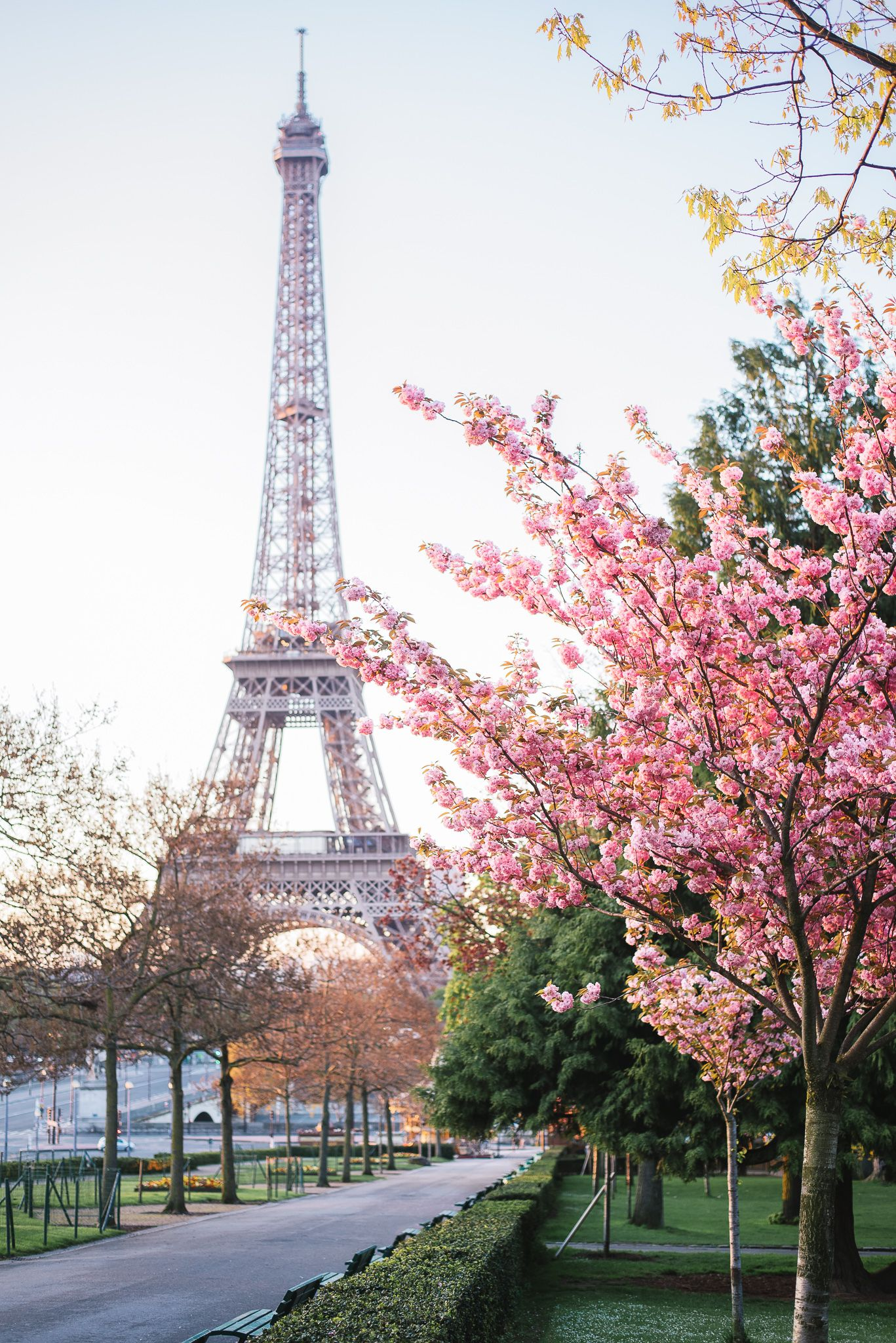 paris in spring is magical cherry blossoms are amazing airplanes cars trains and walking. Black Bedroom Furniture Sets. Home Design Ideas