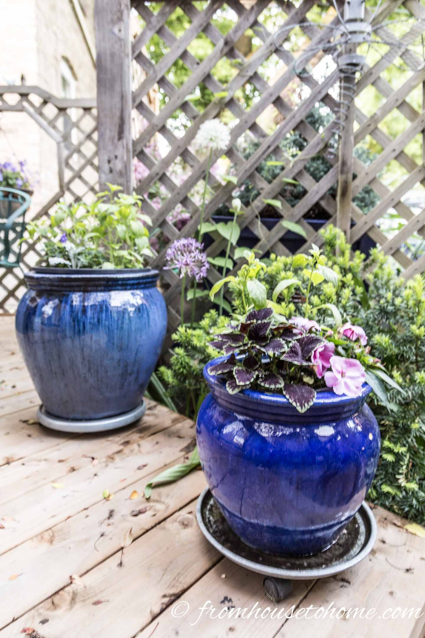 Gorgeous Plants That Grow In Shade #shadeplantsperennial