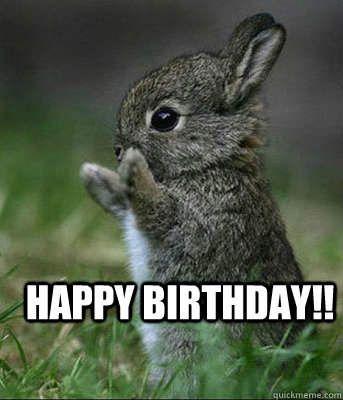 Bunny Birthday Meme Funny Happy Birthday Meme Baby Animals Pictures Cute Animals Cute Baby Animals