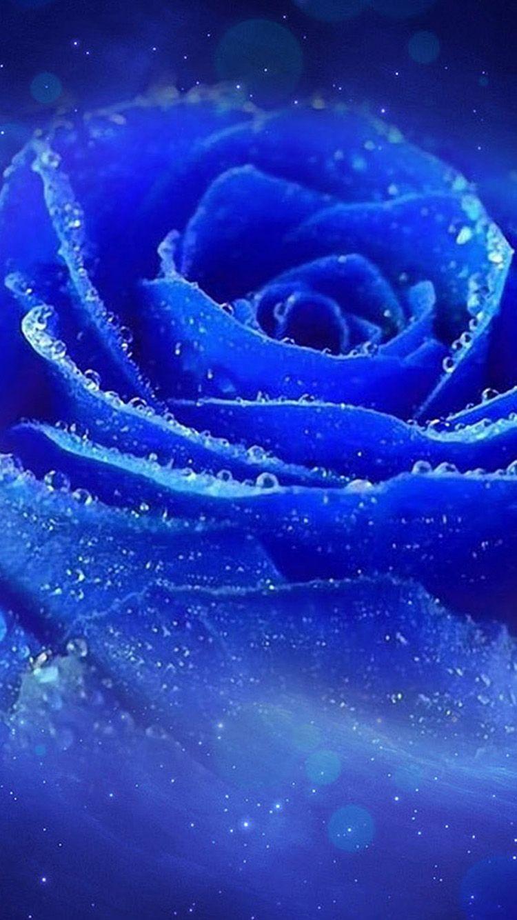 Pesquisa Google Rose Wallpaper Gulab Flower Flower Wallpaper