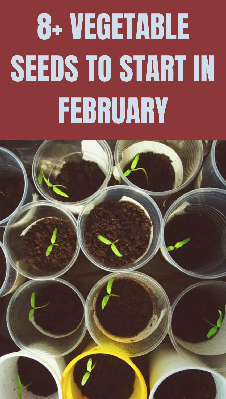8+ Vegetable Seeds to Start in February - Gardenin