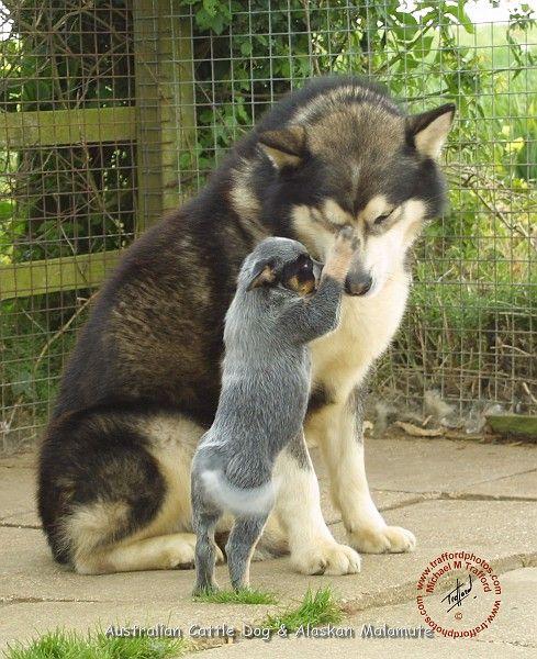 Pin Van Nicole Calvery Op Things I Love Honden Doge Mannen