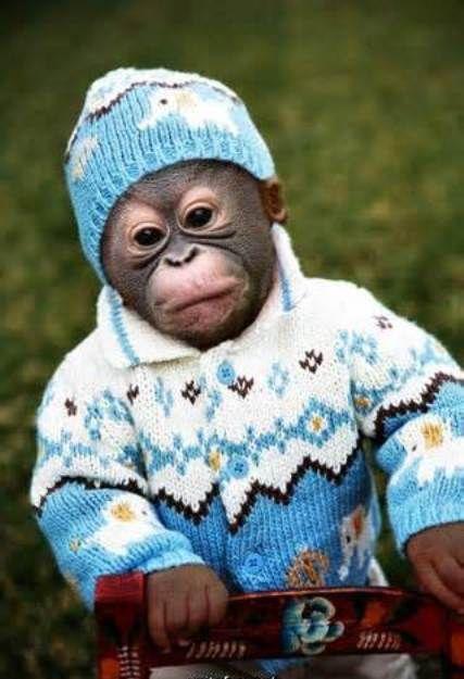 monkey wearing a hat