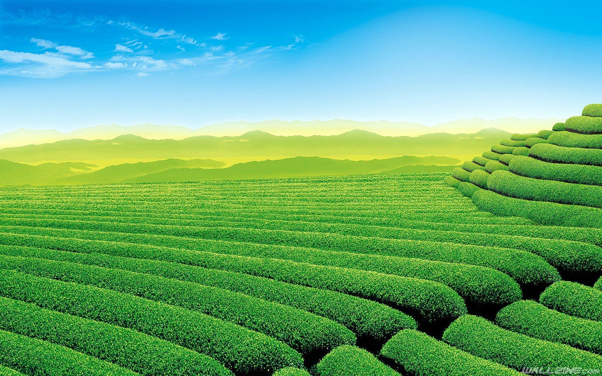 Tea Garden Wallpaper Landschaftsbilder, Landschaftsbau