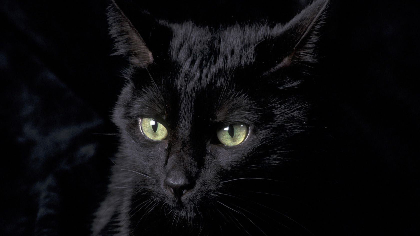 Black Cat Wallpaper Hd Images 1106 Wallpaper Animaljetz Com Afbeeldingen