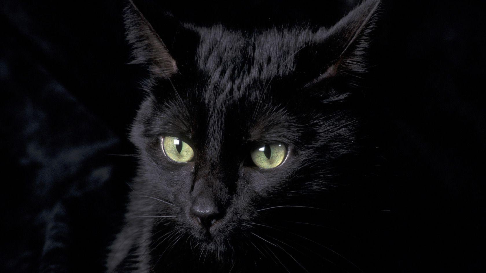 Black Cat Wallpaper HD Images 1106 Wallpaper animaljetz