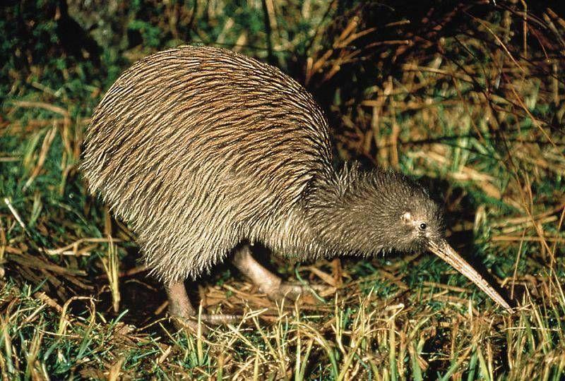 Weird New Zealand Animals 6