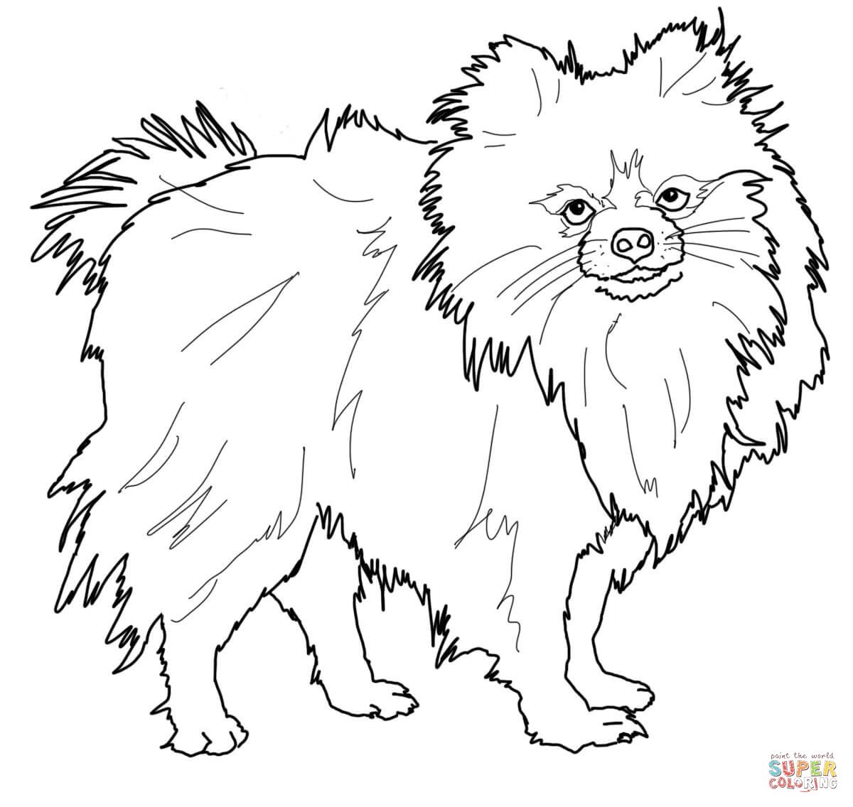 Pomeranian Dog Animal Pet Coloring Page Puppy Coloring Pages