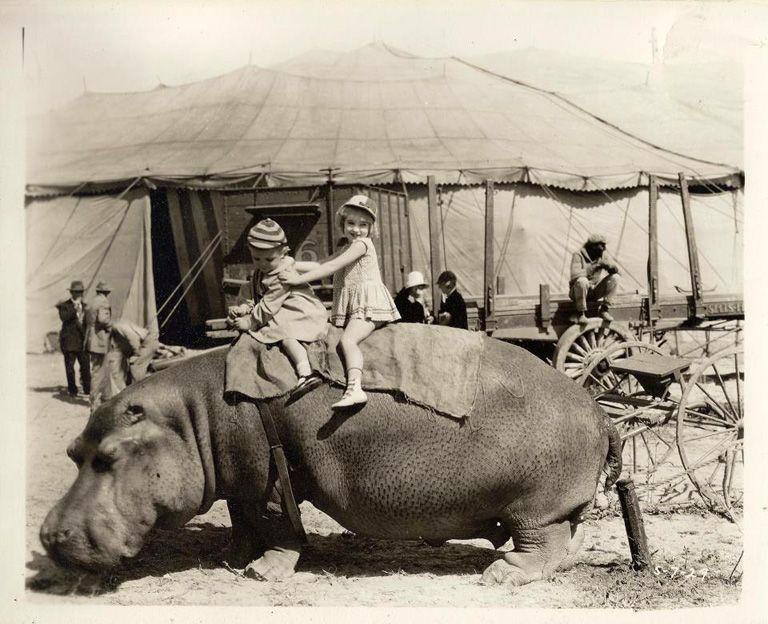 pre show hippo rides