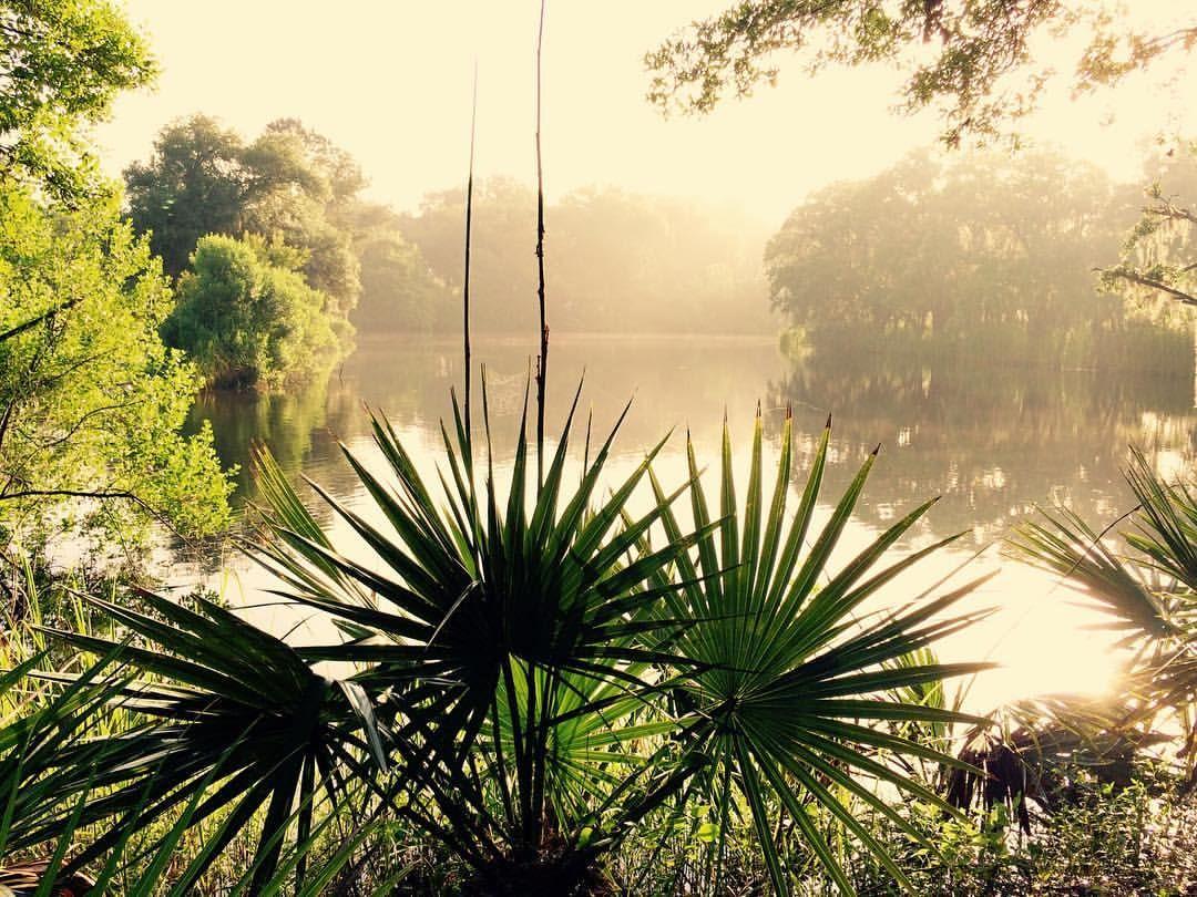 Misty Morning, West Ashley Park, Charleston SC Eye