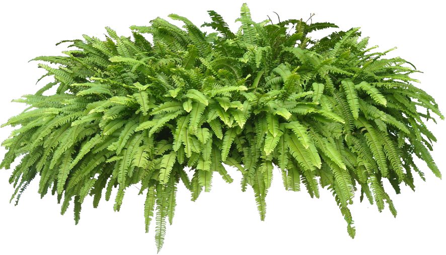 Transparent Tropical Plant - Check out the free plant ...