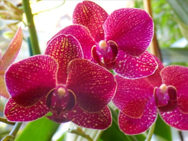Five Dazzling Plants For Your Home Beautiful Orchids Orchids Love Flowers