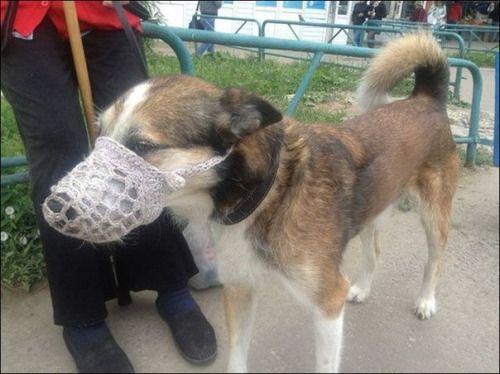 DIY dog muzzle. | Dog muzzle, Dogs, Diy dog stuff