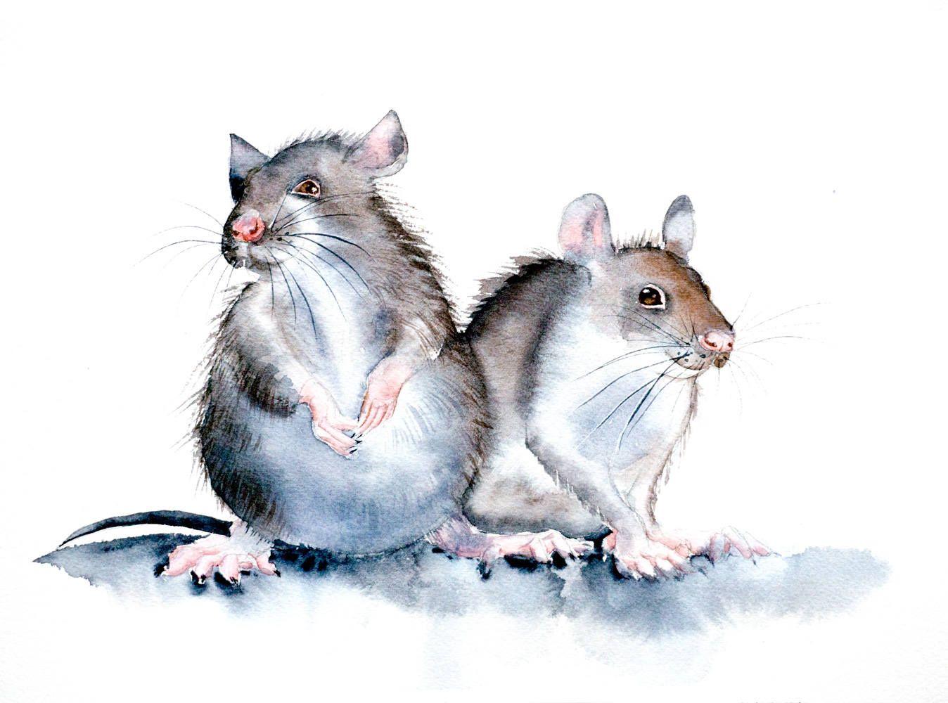 картинки на год крысы вертикальные давние времена