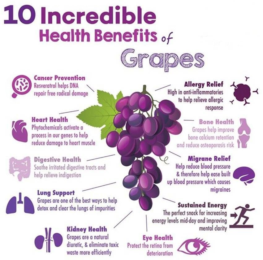 10 health benefits of grapes     JuiceOnABudget is part of Grape health benefits -