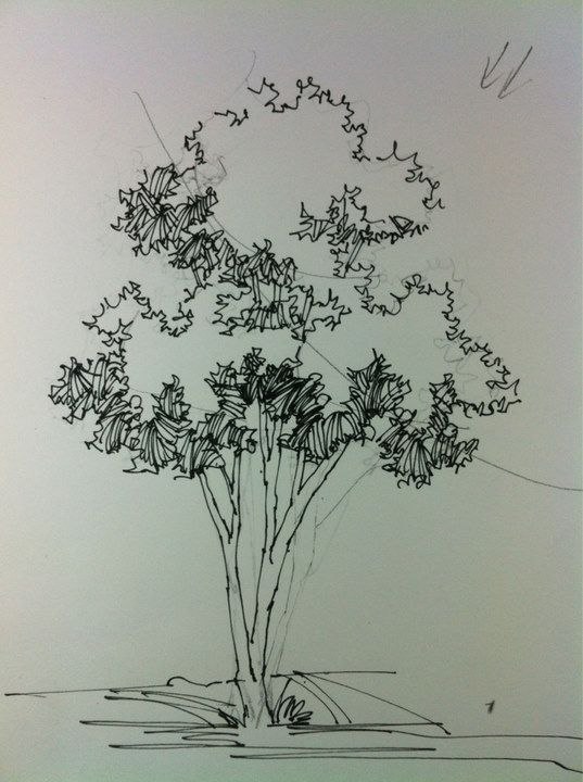 tree renderings - Architecture Drawing Of Trees