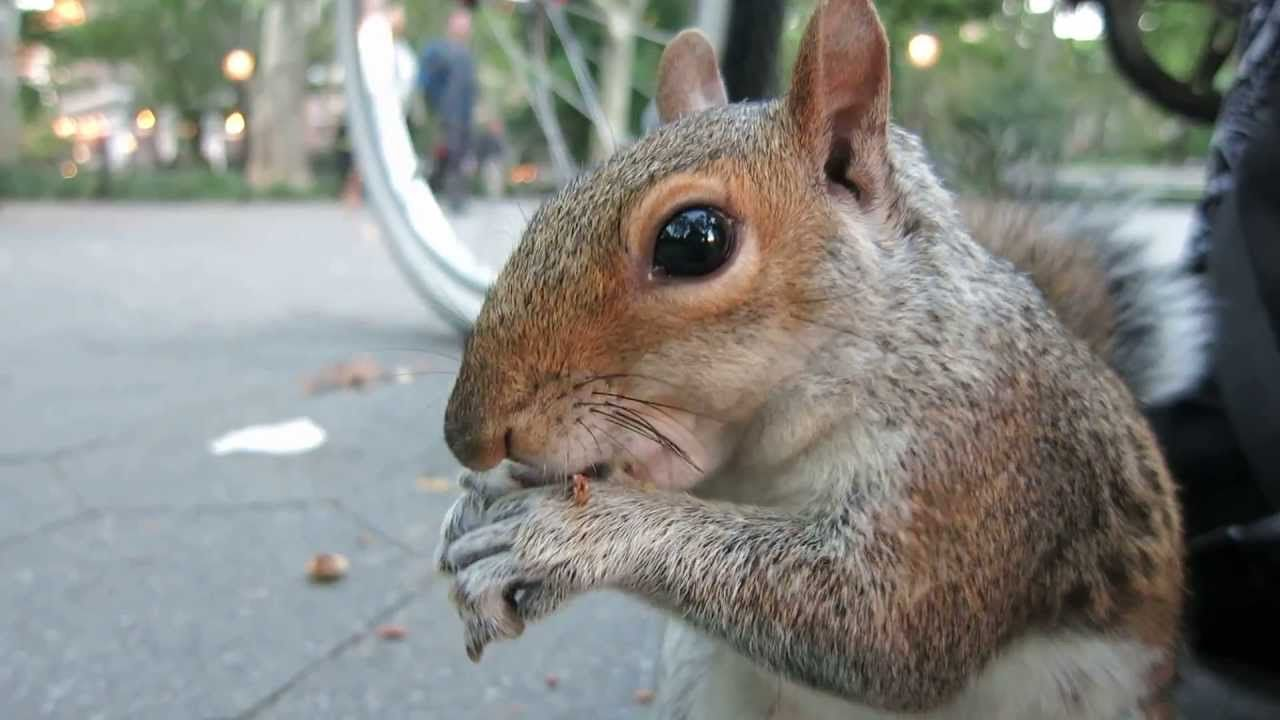 """""""Sneaky"""" the squirrel by RicKy Syers Squirrel, Squirrel"""
