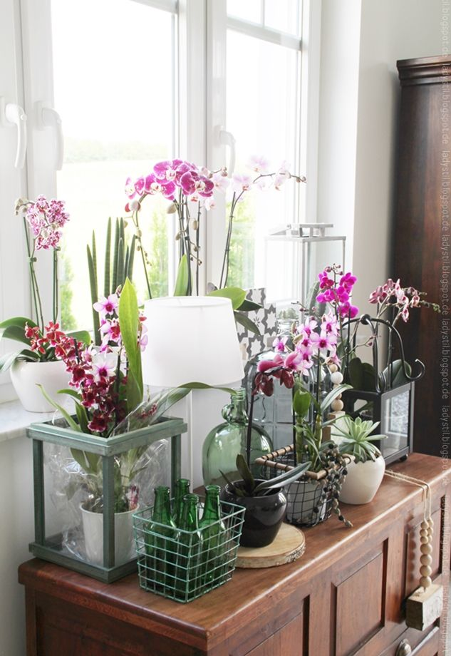 Orchidstylist The Art Of Life Tag Der Orchidee