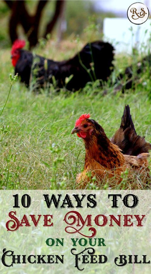 10 Ways To Save Money On Your Chicken Feed Bill Chicken Stuff