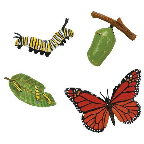 Ciclo de oruga a mariposa