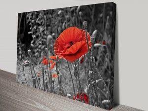 Poppy Colour Splash Canvas Prints Australia