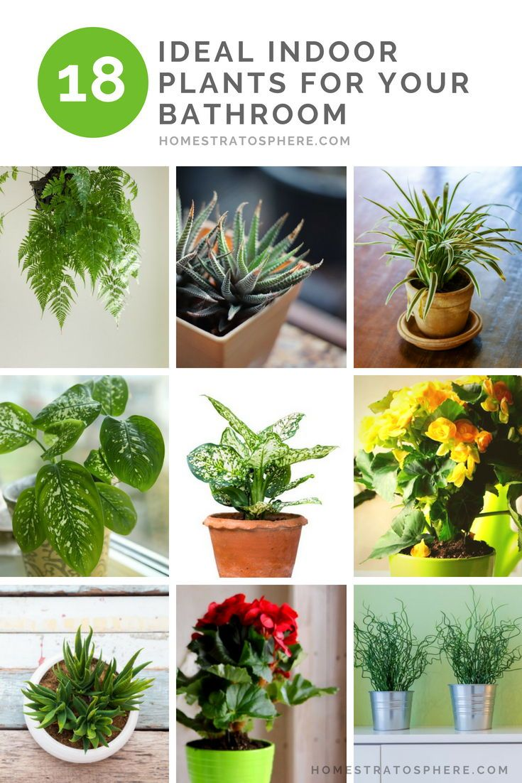 18 Ideal Indoor Plants for Your Bathroom | Hardy houseplants ... on wrightsville house, american girl house, easy clean house, beach house, home small modern house, fluff house, palladium house, gearhead house, topper house, anthem house, the rat house, average house, perfect house, actual house, dibs house, uncomfortable house, reliance house, mattel house, idea house, immense house,