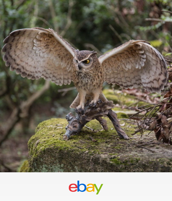 Hi-Line Gift Eagle Owl on Branch with Wings Out Statue