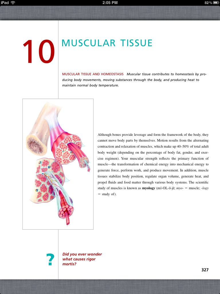 Principles of Anatomy and Physiology, Chapter 10, Muscular Tissue, 1 ...
