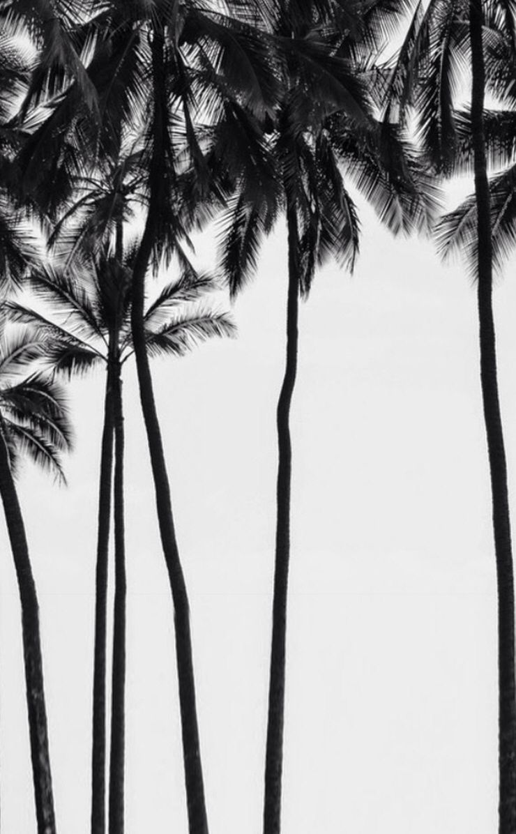 Palm tree wallpaper. White photography, Black and white