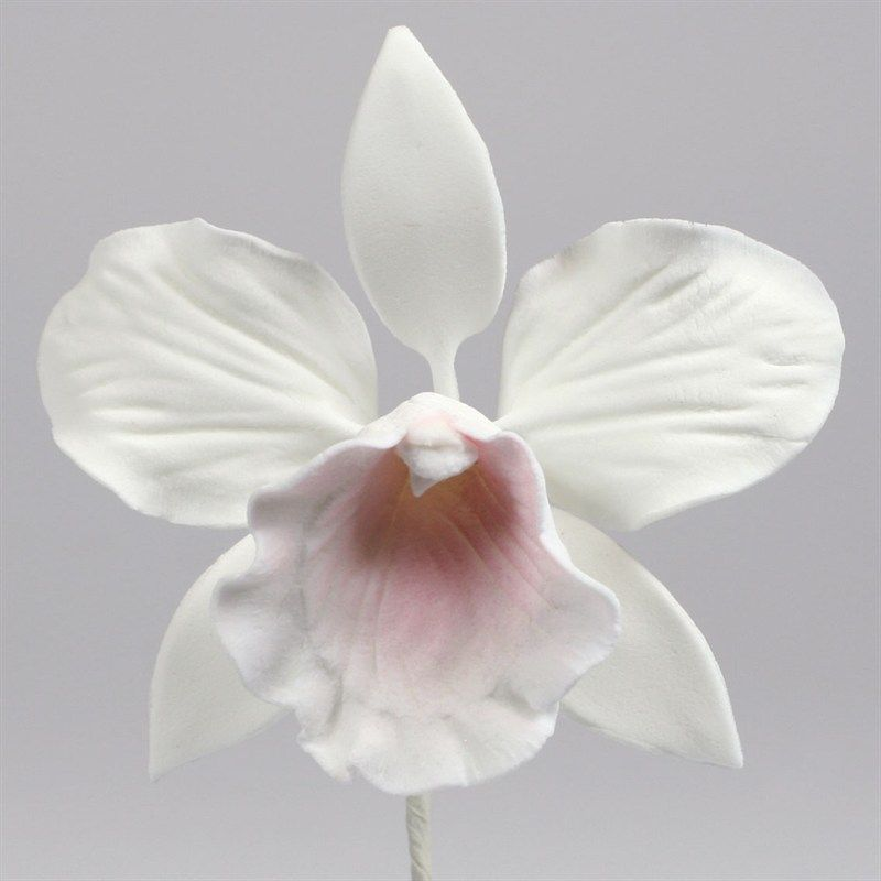 Cattleya Orchid Baby Leaves Wired Single Sugar Flowers Medium Sugar Cattleya Orchid 76mm Cattleya Orchid Cattleya Orchids