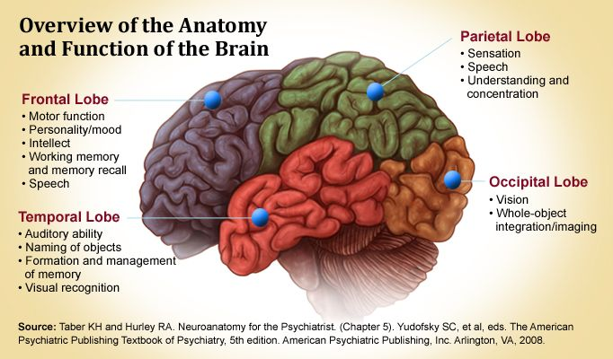 Parts Of The Brain And What They Do brain lobes and what t...