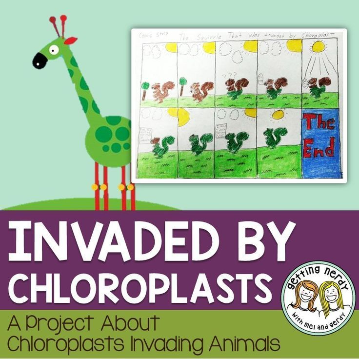 15++ Is chloroplast in animal cells ideas