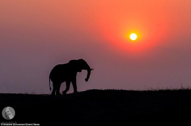 ظلال الحيوانات الأكثر تميزا 10 صور Sunset Pictures African Sunset Sunrise Sunset