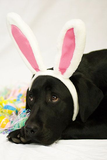 Pop Some Of The Easter Bunny Headbands On Your Dog Dog From Www