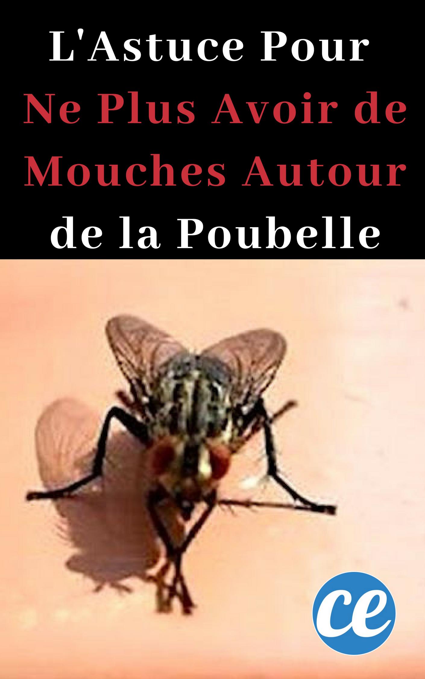 Lutter Contre Les Mouches : lutter, contre, mouches, L'Astuce, Avoir, Mouches, Tournent, Autour, Poubelle., Mouches,, Astuces, Contre, Éloigner