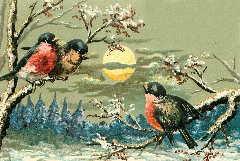 Открытки с птицы