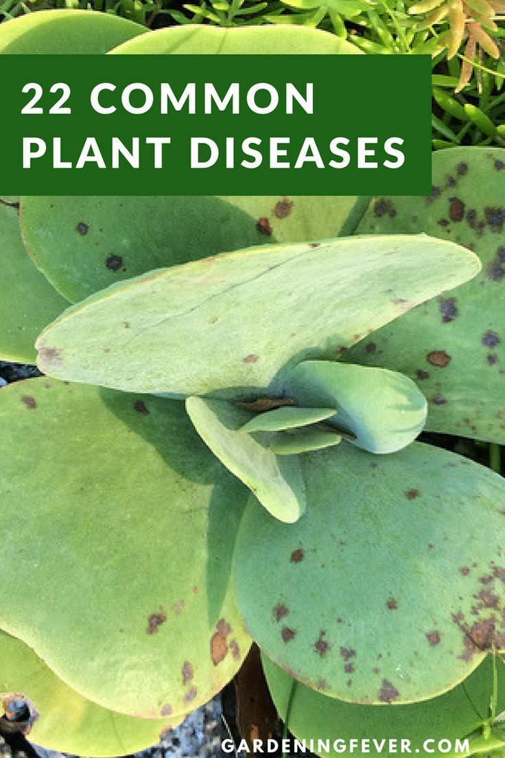 22 Common Plant Diseases With Images And Resources To 400 x 300