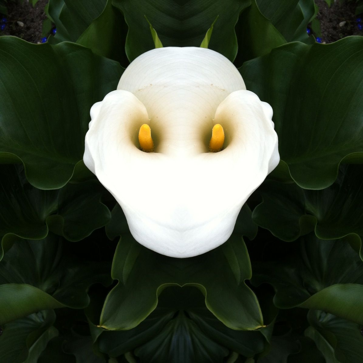 Strange Flower Nature Pinterest Strange Flowers Flower And
