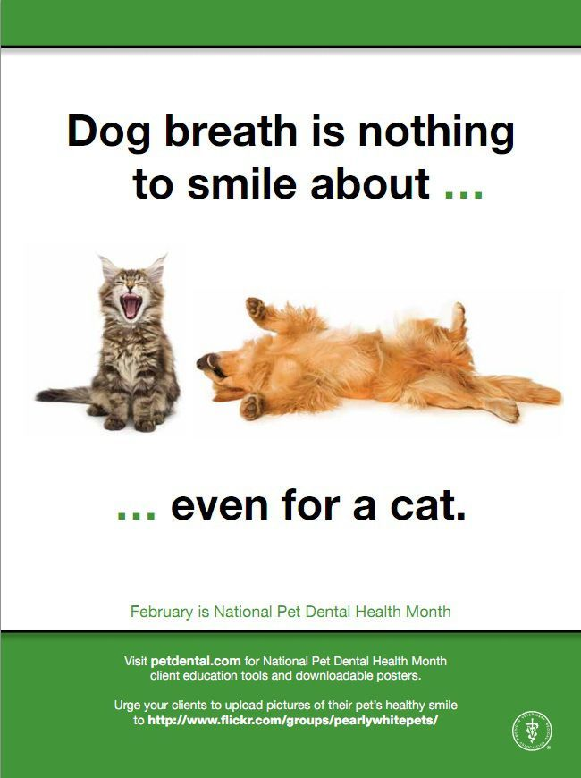 It's time once again for National Pet Dental Health Month