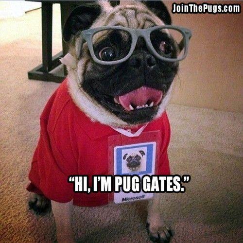 Smart Pug Pugs Pugs In Costume Pugs Kisses