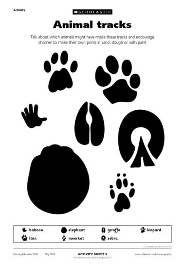 Animal Tracks Free Early Years Teaching Resource Scholastic Animal Tracks Safari Activities Safari Kids