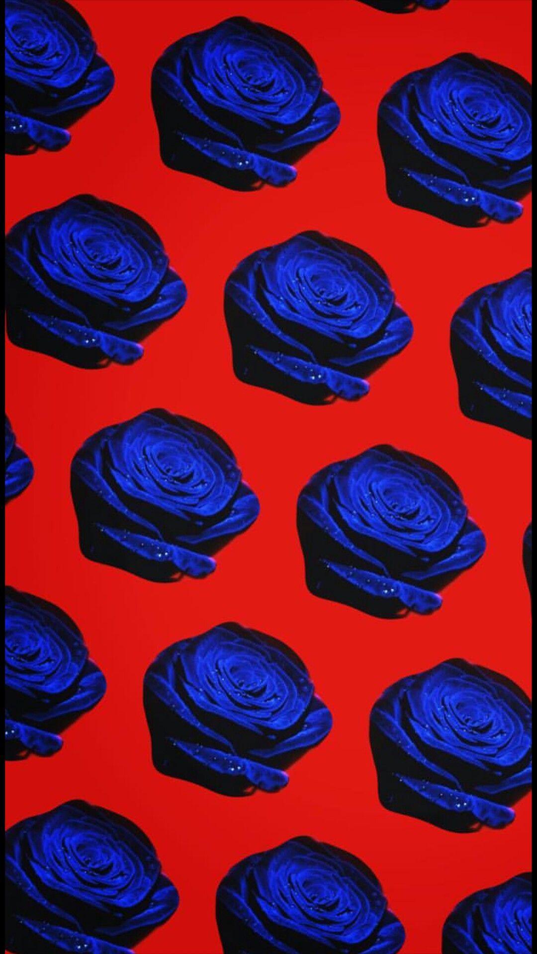 Song Minho Blue Rose Wallpaper