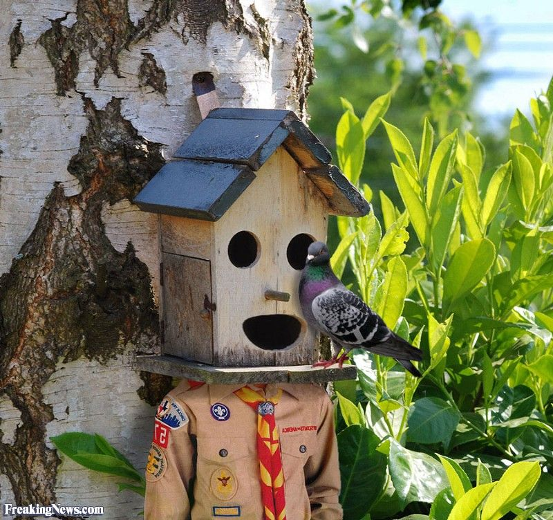 Birdhouse Cool Cute Bird Houses Feeders