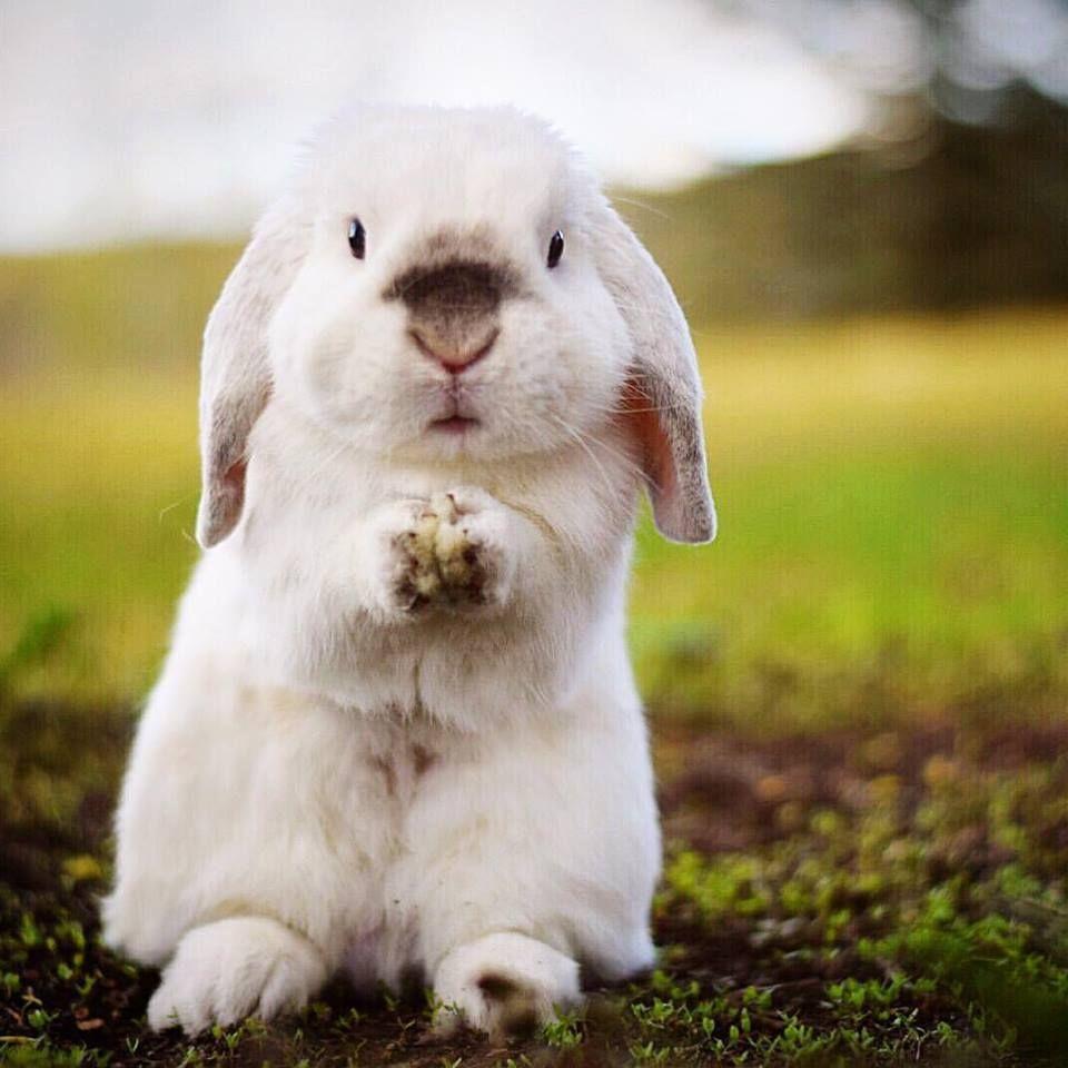 49 Bunnies Baby Animals Funny Cute Animals Cute Animal Videos