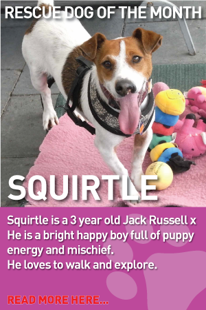Rescue Dogs Of The Month Australian Dog Lover Squirtle Is Very Social And He Seems To Enjoy The Company Of Kids You Can Rescue Dogs