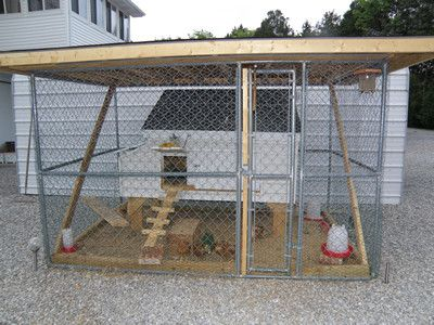 Chicken Coop Within Dog Kennel Taking Care Of Chicks